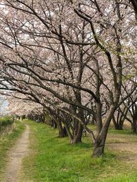4月7日 - グータラ三日坊主の独り言