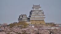 姫路城天守閣と桜 - たんぶーらんの戯言