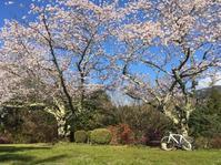 杉村公園〜吉野 - 雨 ときどき 晴れ