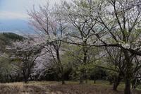 桜めぐり2019浅間神社の桜 - 光画日記2
