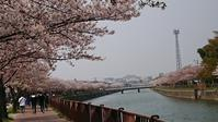 平成 最後の桜 - Food・旅・わんこの生活