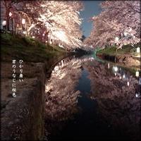夜桜散歩 - すくえあのーと