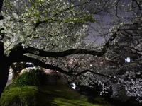 彩の桜 - tokoya3@