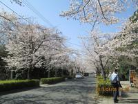 秩父長瀞北桜通り花見の里野土山 - 秩父発 shizuの気まゝなブログ