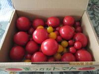 まっかなトマト - 秩父発 shizuの気まゝなブログ