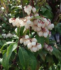 花の季節に - トールペイント&クラフト 〔 すみれの森工房 〕