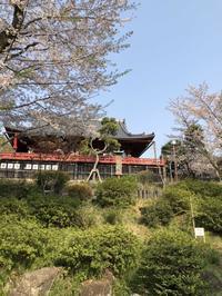 大家好!昨天上野公园樱花会圆满结束!谢谢大家的光临!在这美丽的季节和大家度过了美好的一天,这一天将成为我们美好回忆! - 日向興発ブログ【方南町】【一級建築士事務所】