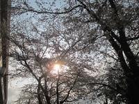 セレブレーションの御案内♡ - 愛・喜び・平和~今日、この日に感謝をこめて~