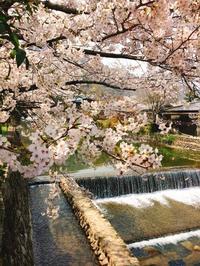 今年も見れた桜たち - blancheの日記