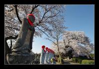 お地蔵様に桜 - Desire