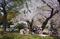 『西武庫公園』でお花見ピクニック - 写真酒
