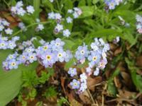 春の小さな花々 - フランス Bons vivants des marais Ⅱ