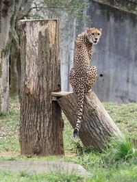 4月11日(木)寒の戻り - ほのぼの動物写真日記