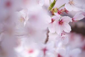 サロンのお客様以外のご注文が増えています♪ - 神戸市垂水区 Petit Lapin~プチ・ラパン~