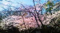 平成最後の花見…明石の釣り@ブログ - 明石の釣り@ブログ