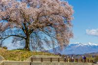 桜巡り、山梨県北杜市 - デジカメ写真集
