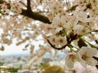 平成から令和へ…2019年の春。 - MIRAI restaurant&cafe