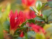 春の終り - HAIKU/summer PHOTO