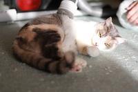 ごはんより掃除機の猫 - きょうだい猫と仲良し暮らし