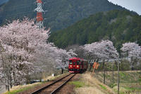 長良川鉄道と桜 - 好きな事を好きな時だけ