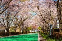 春色の筑波縦走路&りんりんロード - ゆるゆる自転車日記♪