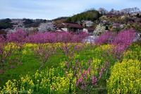 みちのく花見山春景色2 - みちのくの大自然