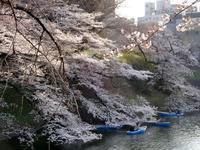 桜2019 - リズムのある暮らし