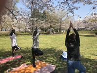 4月のSORA YOGA - Studio Forest
