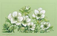 白色の花たちの水彩画 - 油絵画家、永月水人のArt Life