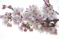 春だなぁ - ノッツォのホデナス