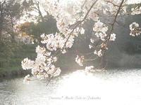 福岡城跡公園(舞鶴公園)。 - Precious*恋するカメラ