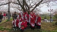 矢那川桜祭に行って来ました - 和楽一座