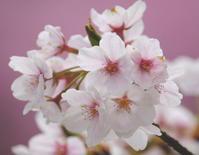 春の妖精を探しに…その2 - 自然がいっぱい4