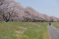SAKURA*並木 - 気ままにお散歩