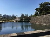 ⭐️  桜三昧  ⭐️ - comodo my room