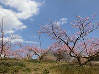 新府桃の里ウォーク - 風路のこぶちさわ日記