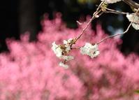 それぞれの花びら - monn-sann