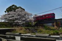 養老鉄道の桜 - HIROのフォトアルバム