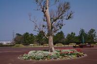 吉田公園(花散策) - 山の花、町の花
