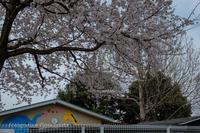 19散歩〜さくら散歩幼稚園 - 散歩と写真 Fotografia e Passeggiata