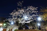 道後の夜桜 - アンチLEICA宣言