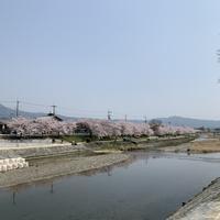 珈琲屋ナカガワから桜満開の上賀茂神社と焼肉の天壇へ。 - ほろ酔いにて