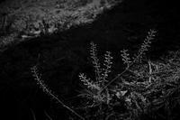 路傍草 - フォトな日々