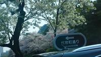 皇居周辺の桜と東京見物 - 緑と手仕事 ワンダーライフ
