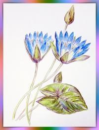 水彩色鉛筆 - 楽趣味(Lakshmi)