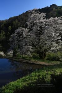 さよならの朝に櫻をかざろう - 花野鳥風月MISCHEH