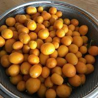 金柑とレモン - おうちやさい