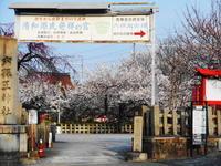 京都市 桜の穴場? 六孫王神社 - 転勤日記