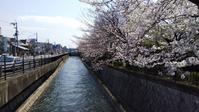 2019.04.04の京さんぽ~川端通りを南座まで - 京さんぽ