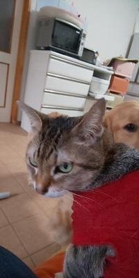 猫事件 - タバサは語る